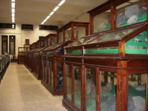 museo vetrine